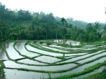 Moving to Bali - The Initial Planning